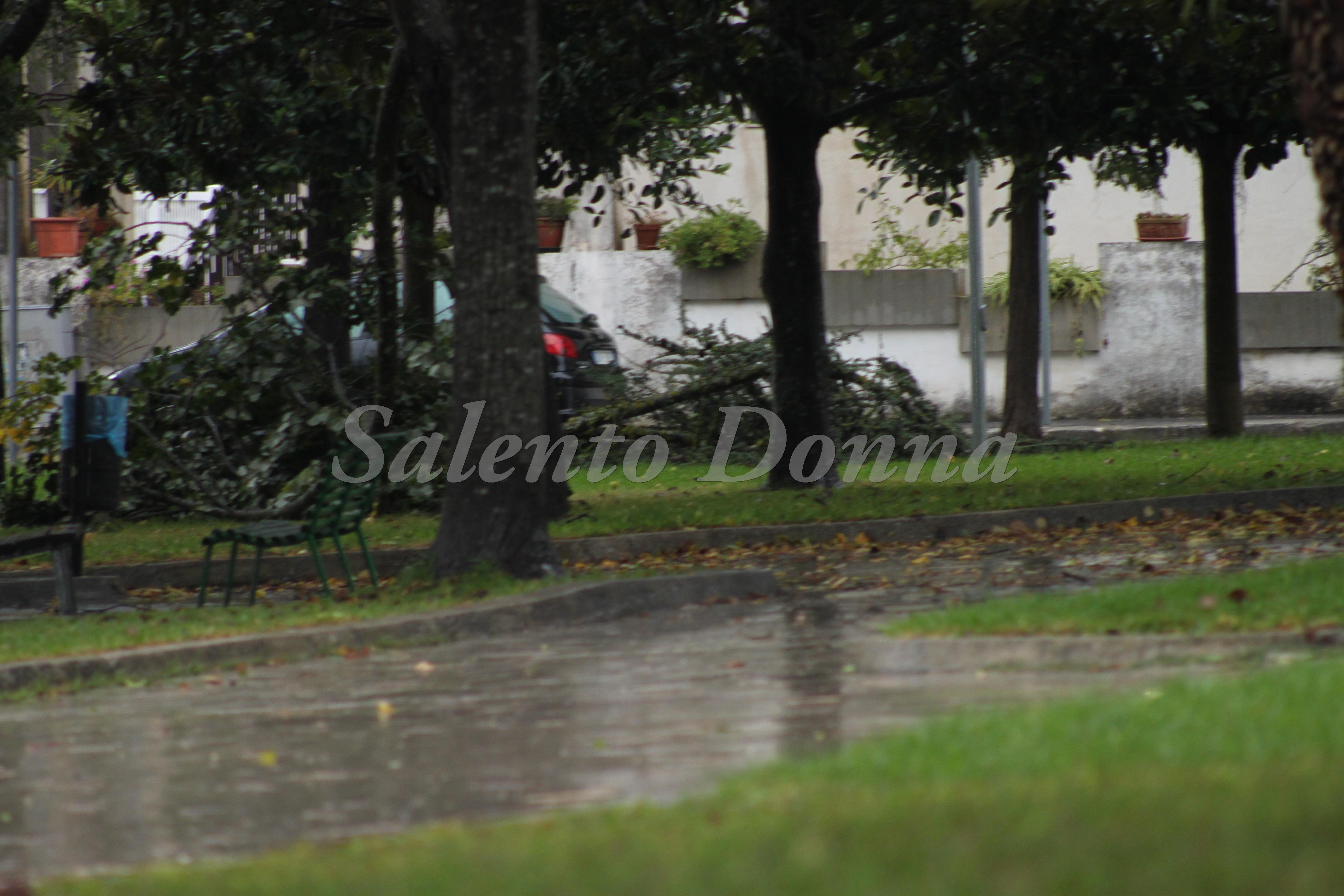 Maltempo e danni nel Salento, sulla tangenziale da Leuca alberi caduti