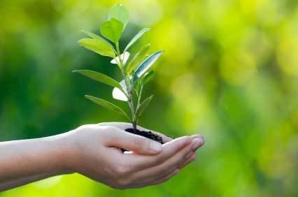 """Martignano oggi in località """"Partite"""" festa degli alberi"""